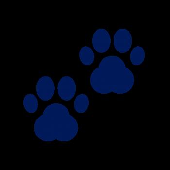 Mascotas y veterinarios