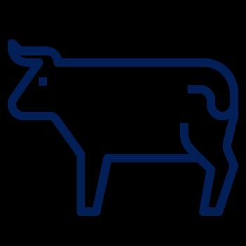 Vacuno o bovino